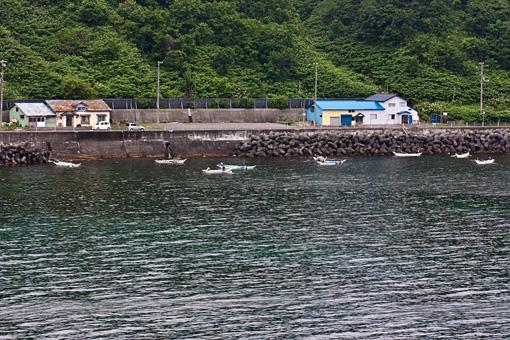 利尻島 うに漁
