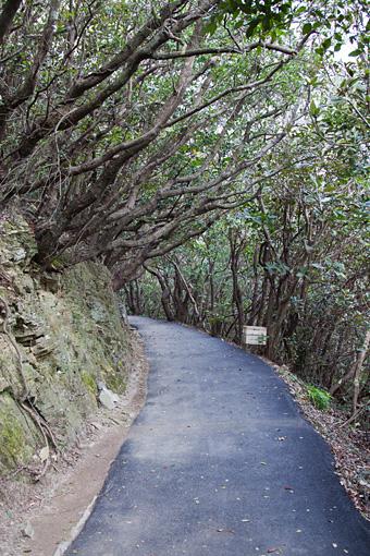 佐田岬灯台への道