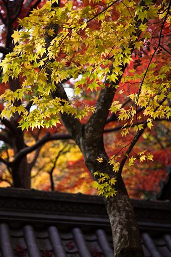 永源寺の紅葉